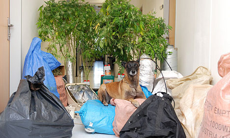Police dog finds pot and lost post