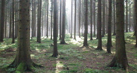 Austria largest importer of wood in OECD