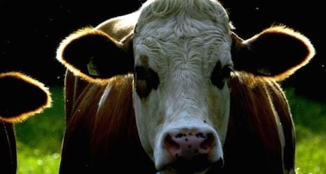 43-year-old farm labourer killed by bull