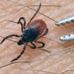 TBE cases fall in Styria with mild Spring