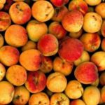In Austria apricots are called Marillen, in Germany, Aprikosen. The Austrian word has its origins in the Slavic languages. There are many differences in names for food in Austria and Germany. Tomatoes are not Tomaten, but Paradeiser. Photo: APA