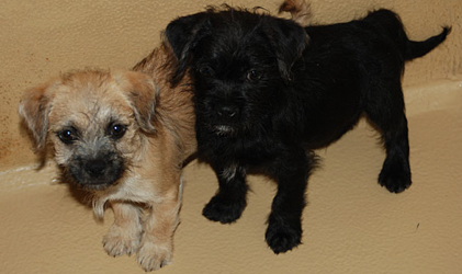 Illegal puppies offered for sale online