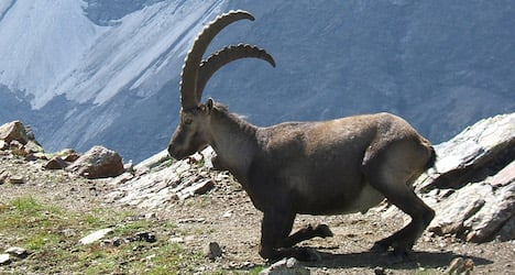 Man seriously injured by mountain goat