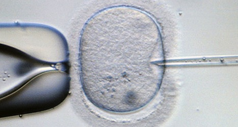 Fertility problems hit one in five Austrian couples