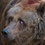 Farmer attacked by bear in Salzburg province