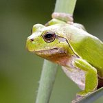 The frog says quaak: Communicating with pond animals can be tricky in German. Frogs don't ribbit, they quaak, which is not to be confused with the ducks saying quak quak (note the one less a).Photo: Photo: APA/KURT KRACHER