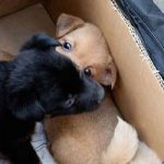Prison sentence for illegal puppy traders