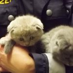 Police rescue kittens from illegal smuggler