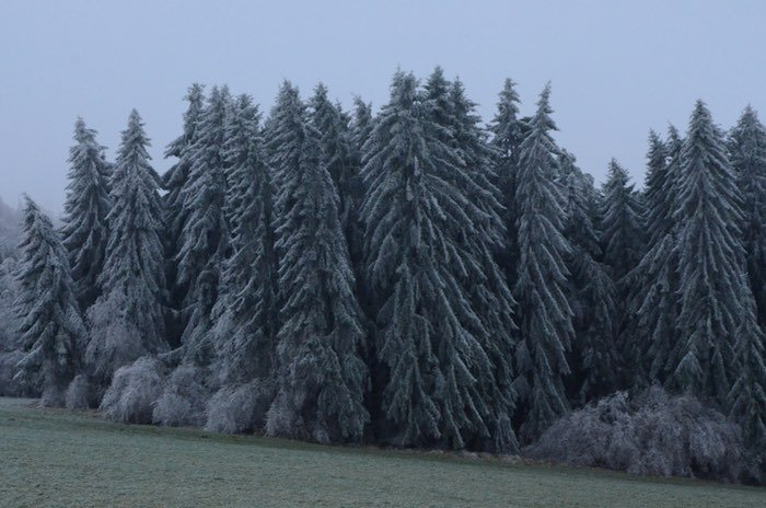 Ice storm in the Waldviertel