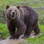 """<b>Jemandem einen Bären aufbinden:</b> Literally - to tie a bear on someone. The closest English equivalent would be """"to put one over someone"""" - or to bamboozle them. When you've just moved to Austria, you'll most likely be the subject of this phrase.Photo: Shutterstock"""
