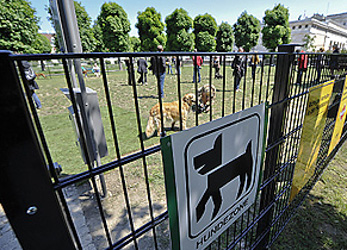 Dog owner in court after police brawl