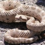 Woman bitten by rattlesnake at reptile zoo