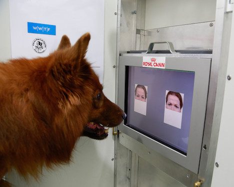 Study: Dogs can read basic human emotions