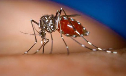 Asian mosquitoes could carry deadly diseases