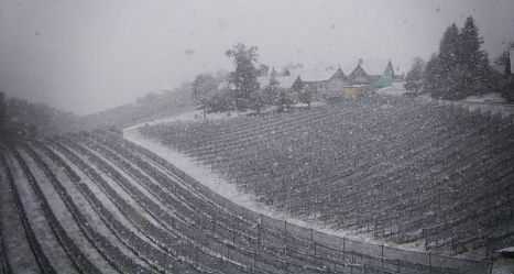 Weather chaos as Austria hit by April snow