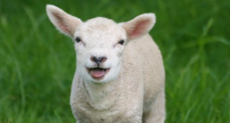 Beheaded lamb mystery leaves police stumped