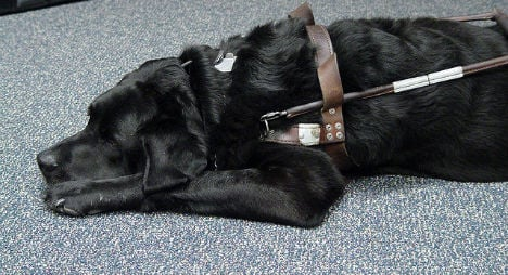 Blind man insulted for not picking up after his dog