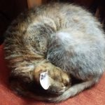 Missing moggy found in time for Christmas after four years