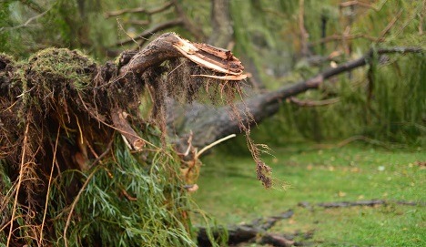Storm warnings given for Vienna, Styria and Lower Austria