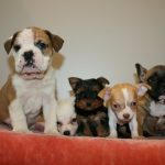 47 rescued puppies now available for adoption
