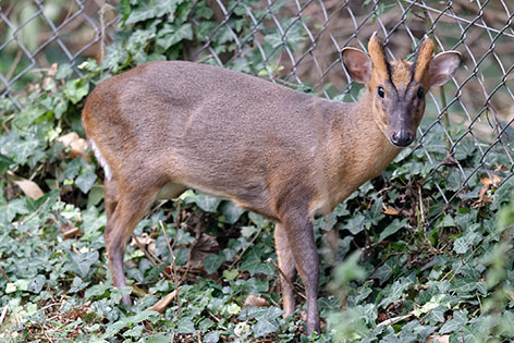 Popular animals to be phased out at Schönbrunn to stop them going native