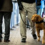 Austria-Turkey relations go to the dogs over airport checks