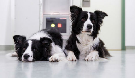 Vienna researchers trial touch screen games for dogs