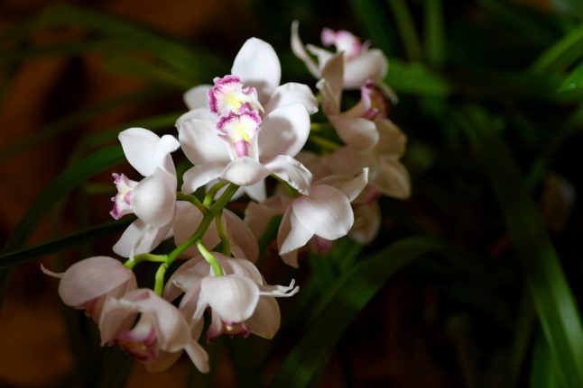 Austrian triathlete freed by kidnapper after complimenting orchids