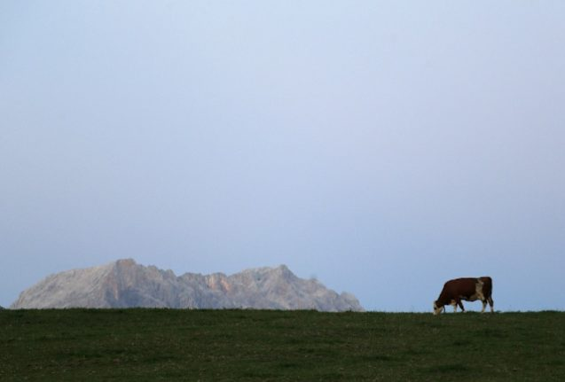 Hiker partly to blame for getting trampled to death by cows in Austria