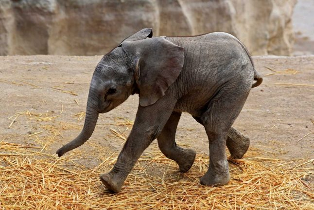 'Baby elephant': Austria announces 2020's word of the year