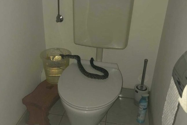 Why do snakes keep appearing in Austrian toilets?