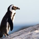 Penguin rescued after being 'kidnapped' from Salzburg zoo